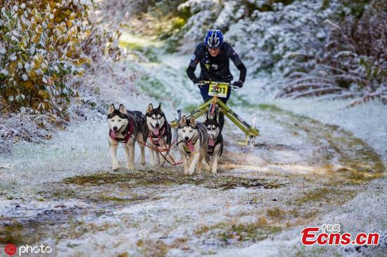 Huskies competition held in Estonia