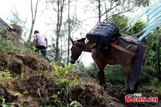 In pics: Horse caravan in E China village